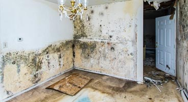 Mold Remediation, Removal, and Rebuilding in Greater Philadelphia