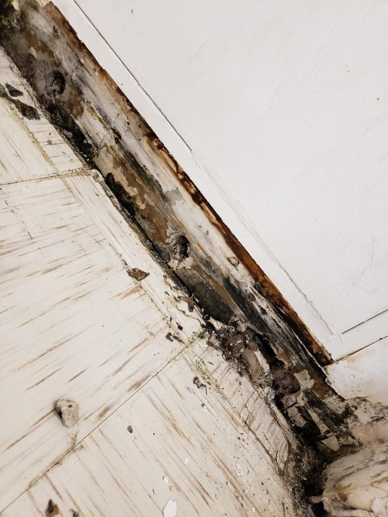Mold behind baseboards